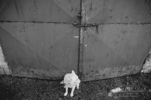 vencurik-foto-svadobne-vychod-054